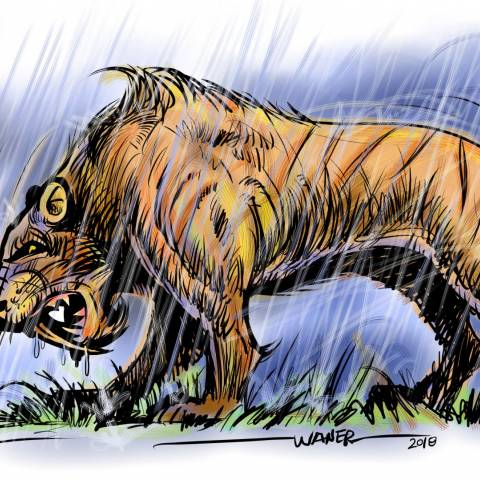 Sabertooth in the Rain